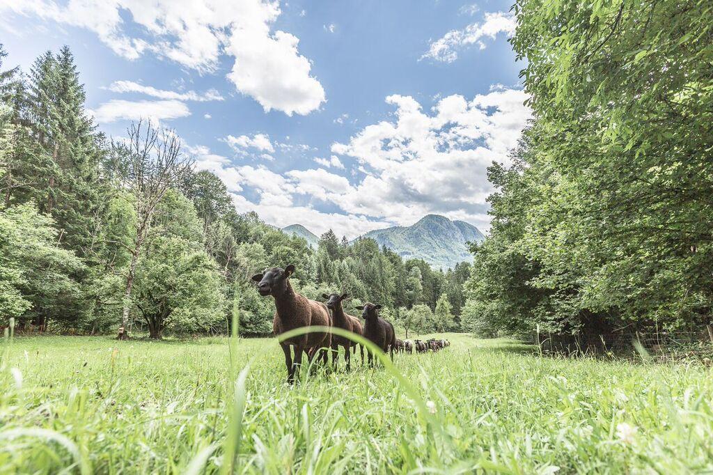 Nationalpark Gesäuse, Natur-und Geopark steirische Eisenwurzen, Gesäusepartner, Rinntaverne, Palfau